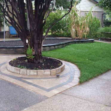 Front lawn with tree and plant box